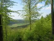 Frische Waldluft